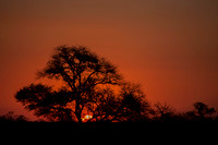 Sabi Sands South Africa