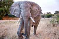 Big Tanzanian Wildlife