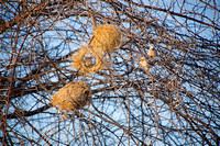 Not-so-big Tanzanian Wildlife