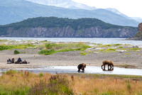 Hallo Bay Bears